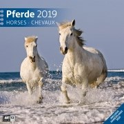 Pferde 2019