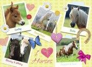 300 Teile XXL Puzzle: Meine Lieblingspferde