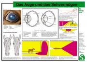 Lehr-/ Pferdetafel (A4) -  Das Auge und das Sehvermögen