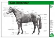 Lehr-/ Pferdetafel (A4) - Das Exterieur