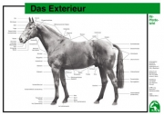 Lehr-/ Pferdetafel (Großformat) -  Das Exterieur