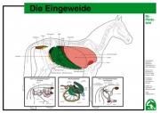 Lehr-/ Pferdetafel (A4) - Die Eingeweide