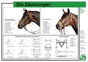 Lehr-/ Pferdetafel (A4) - Die Zäumungen