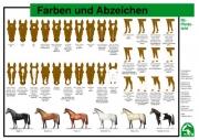 Lehr-/ Pferdetafel (Großformat) - Farben und Abzeichen