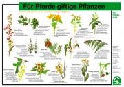 Lehr-/ Pferdetafel (A4) - Für Pferde giftige Pflanzen