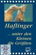 Haflinger - unter den Kleinen die Größten (DVD)