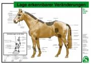 Lehr-/ Pferdetafel (A4) - Lage erkennbarer Veränderungen